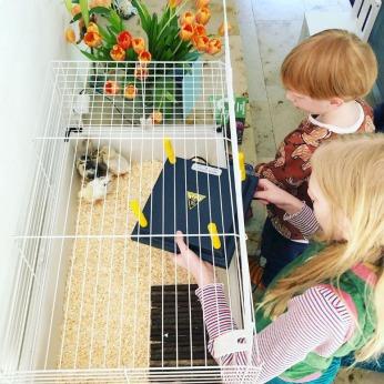 28 maart verschonen kuikens